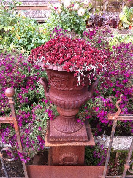 Pflanzen Balkon Terrasse Garten Blumen Boehning Koenigstein 06. ...